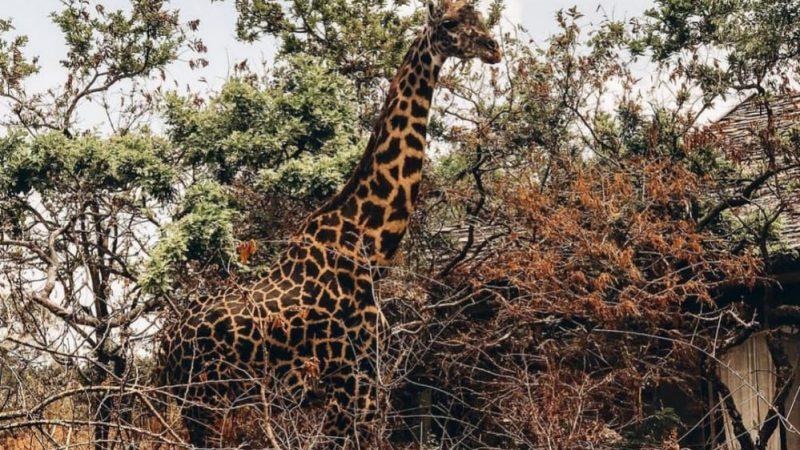Wildlife Safari Packages of Tanzania